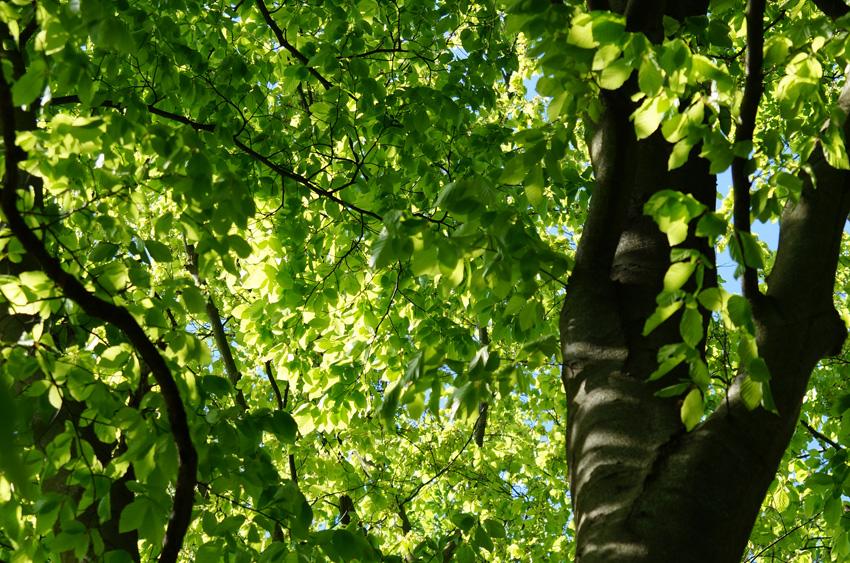 Ausstellung Stadtgrün-Waldgrün